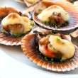Queen scallop close up. — Stock Photo #10886167
