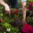 Flower bed — Stock Photo #10735806