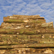 Stock Photo: Lumber stack