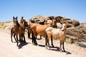 Group of wild horses — Stock Photo