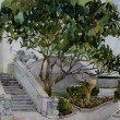 Great magnolia tree and a stairs with chimera in Livadia waterco — Stock Photo