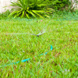 Sprinkler watering the green grass — 图库照片