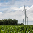 Three wind turbines in corn field — Stock Photo