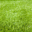 Artificial grass - Stock Photo