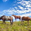 Three quarter horses standing on a hill — Stock Photo