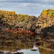 in ballintoy bay basalt rock — Stock Photo