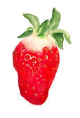 Watercolor image of strawberry — Stock Photo