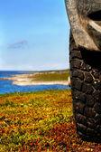 Wheel and tundra coast — Stock Photo