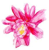 Fiore rosso grunge — Foto Stock