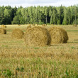 Field with bales of hay or at harvest time — Lizenzfreies Foto