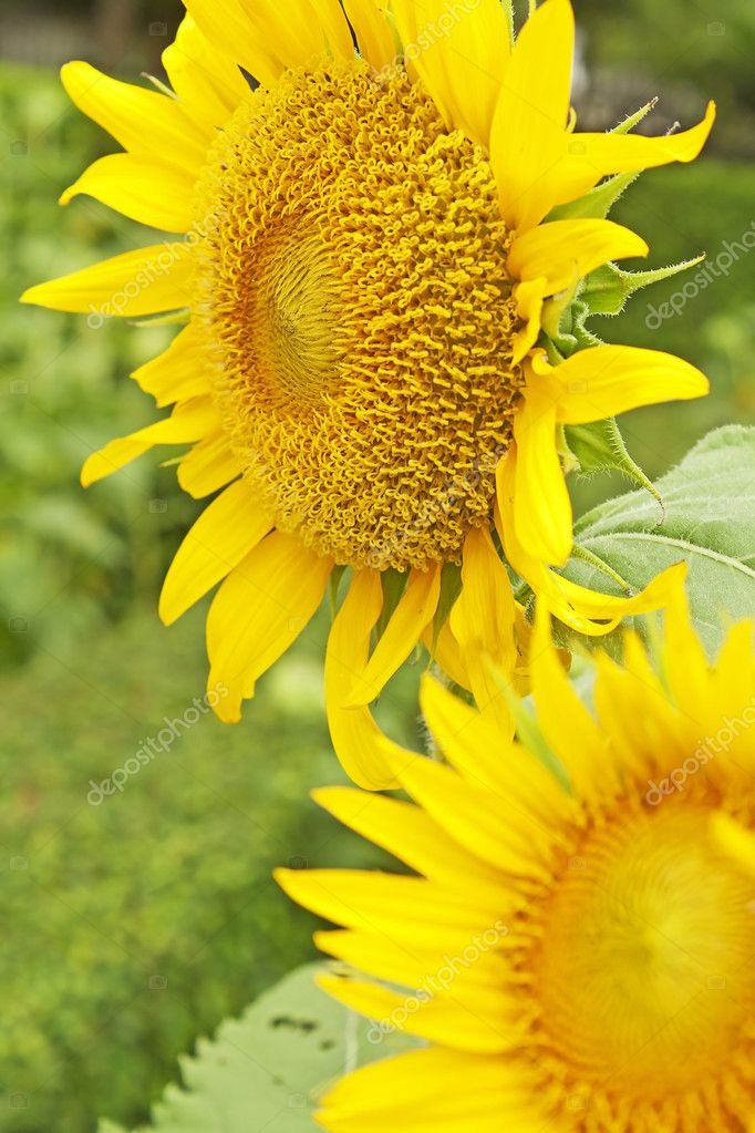 The flowers are fresh and cheerful. — Stock Photo #11409655