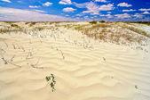 Sand ringar — Stockfoto