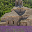 Sénanque Abbey (Provence, France) — Stock Photo