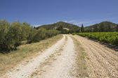A dirt road lined with vineyards and olive trees. — Stockfoto