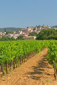 Vineyard in Provence ( France) — Foto Stock