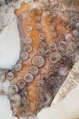 Octopus on the market — Stock Photo