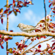 Spring, birds,threes and sky — Stock Photo #11274549