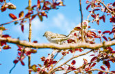 Spring, birds,threes and sky — Stock Photo