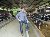 Cowboy and Cows, Farming — Stock Photo