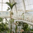 Palm House, Kew Gardens, London — Stock Photo