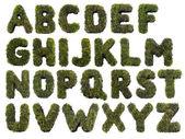 Alfabeto erba — Foto Stock