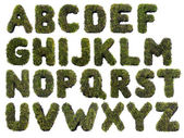Grass alphabet — Stock Photo