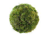 Moss sphere — Stock Photo