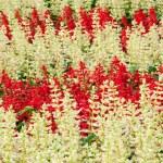 ������, ������: Flower Garden