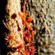Red ants — Stock Photo