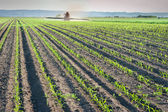 Herbicides spraying — Foto Stock