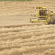 Harvester working in a wheat — Stock Photo