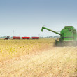 Combine harvesting soybeans — Stockfoto #11793200
