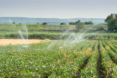 Irrigating of soy beans — Stock Photo