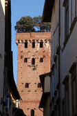 Guinigi Tower in Lucca-Italy — Stock Photo