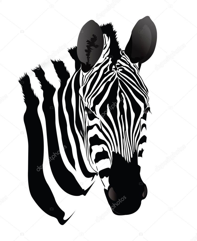 Cebra blanco y negro — Vector de stock #11906683