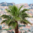 Palm in Cannes, film festival — Stock Photo #11355860
