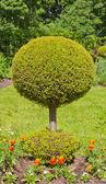 Dekorativa träd — Stockfoto