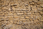Wall and stems — Stock Photo