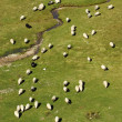 Flock of sheep on mountain pastures vertical — Stock Photo