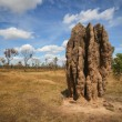 Termite mounds (Nasutitermes triodae), Kakadu National Park, Australia - Stock Photo