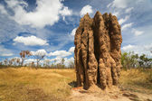 Termite mounds (Nasutitermes triodae), Kakadu National Park, Australia — Stock Photo