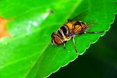 Drone fly — Stok fotoğraf