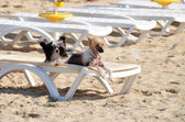 Dog Days of Summer — Stock Photo
