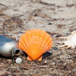 Canteen on the beach with seashells — Stock Photo