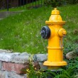 Foto Stock: Yellow Fire Hydrant Toronto Canada