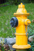Yellow Fire Hydrant in Toronto — Stock Photo