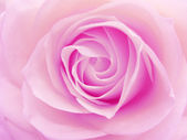 Pink rose heart closeup — Stock Photo