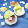 Royalty-Free Stock Photo: Pearls in sea shells on blue background
