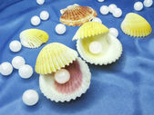 Pearls in sea shells on blue background — Stock Photo
