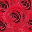 Red roses floral background — Foto de stock #10930519
